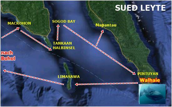 Tauchsafari nach Insel Leyte - Walhaie Philippinen