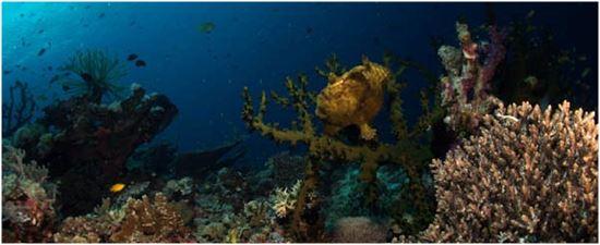 Diving Leyte