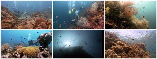 Tauchen Leyte Napantau