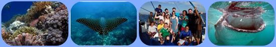 philippines liveaboards scuba diving