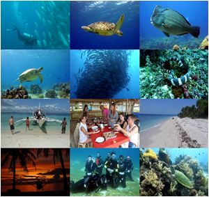 diving philippinen